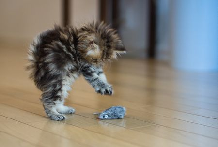 Reasons Why Kittens Are Aggressive And How To Stop It