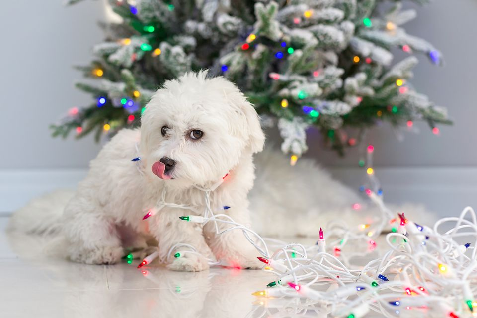 puppy wrapped in christmas lights