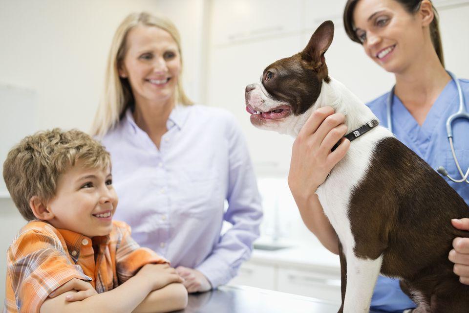 Enfermedades zoonóticas que puede contraer de su mascota