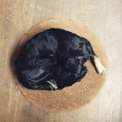 Dog sleeping on rug