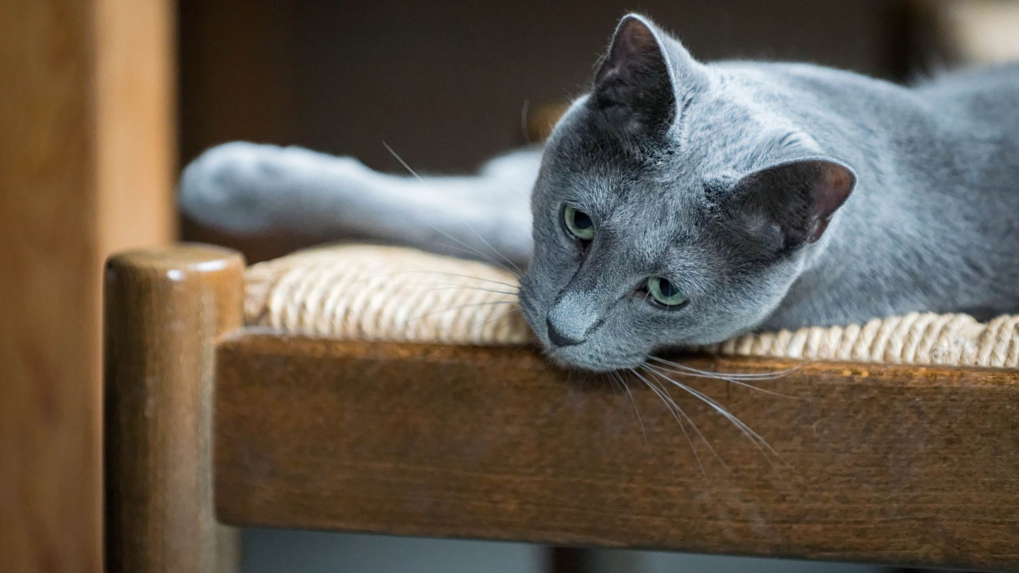 The Best Cat Breeds For People With Allergies