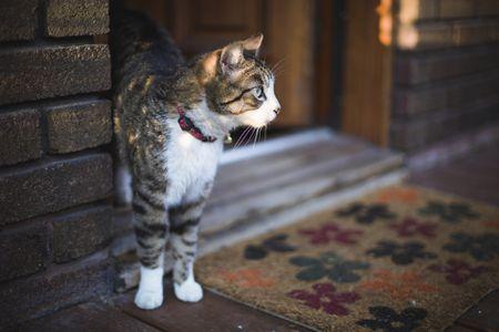 How To Prevent Cat Door Escape Attempts