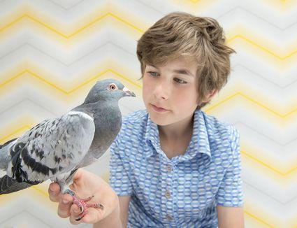 Pigeon in boy's hand