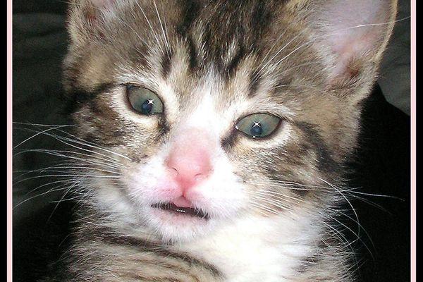 Kitten in mid-sneeze.