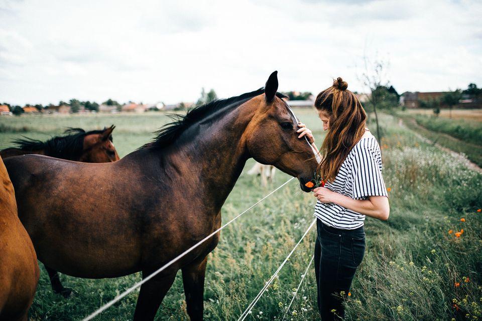 Niña, caricias, caballo