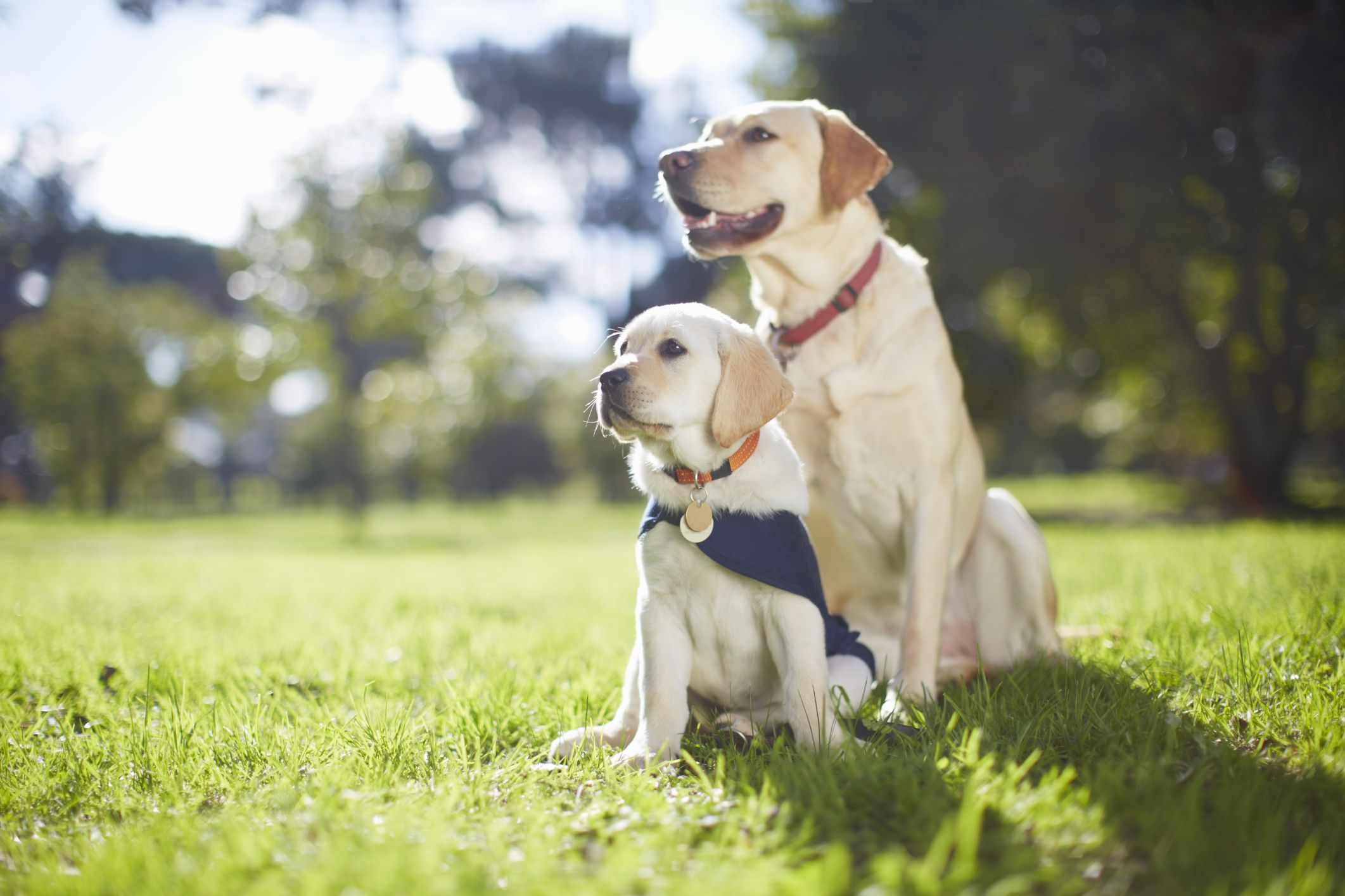 3 Rules for Raising a Puppy that You Want to Live with