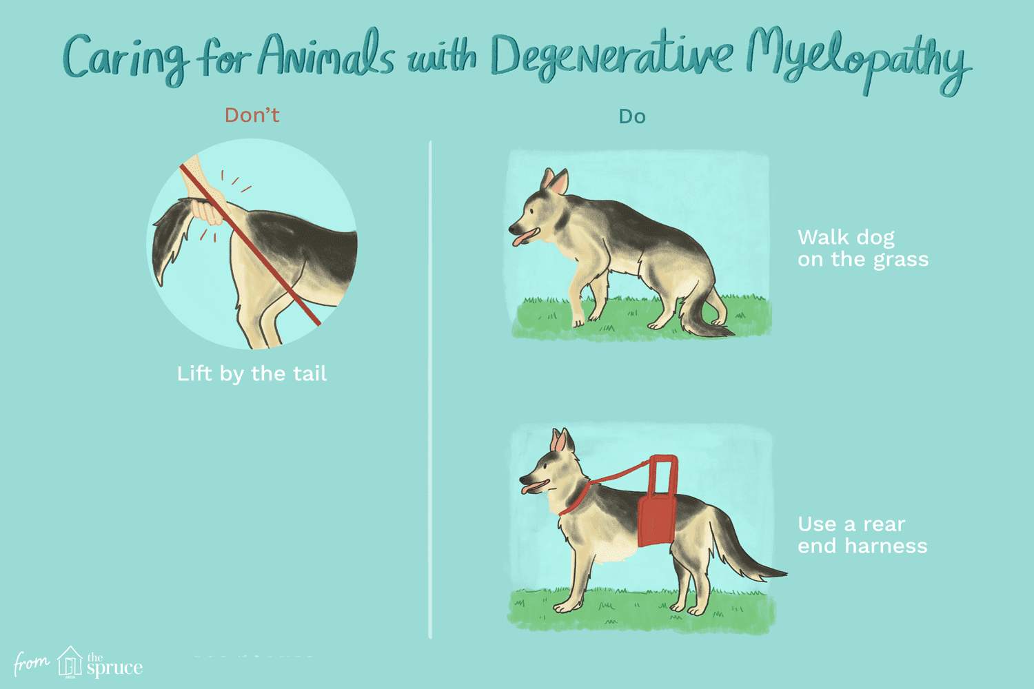 How to Treat Degenerative Myelopathy in Dogs