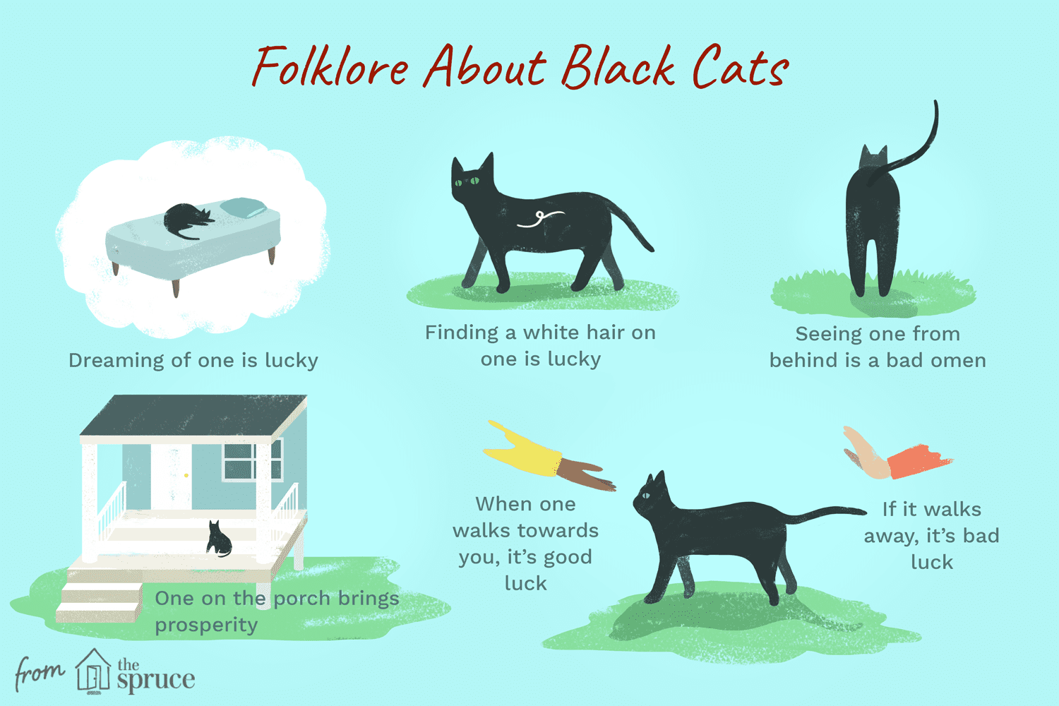 Longtime Superstitions About Black Cats