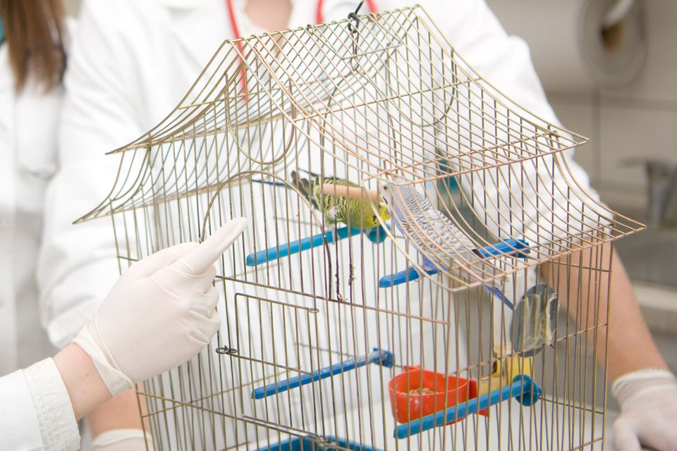 Parrot with vet