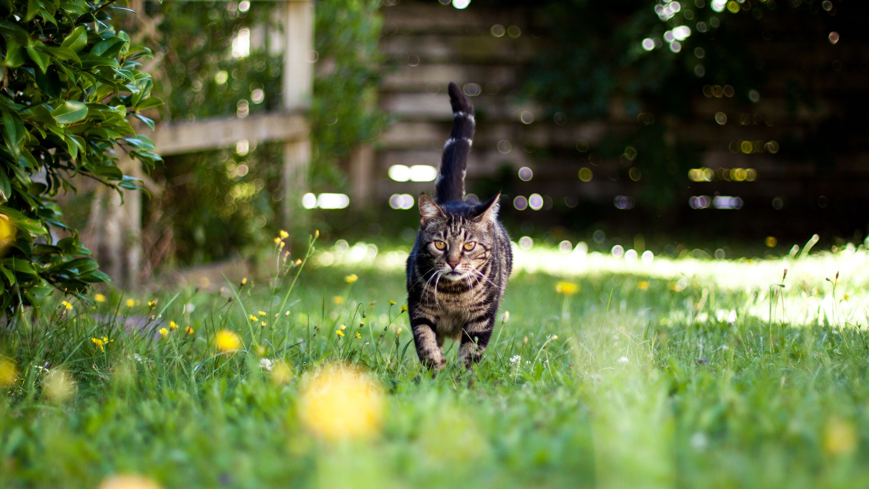 The 7 Best Cat Repellents of 2019
