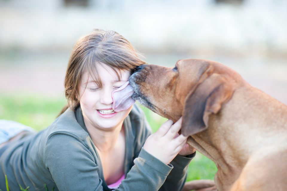 Brown dog licking girl's face.