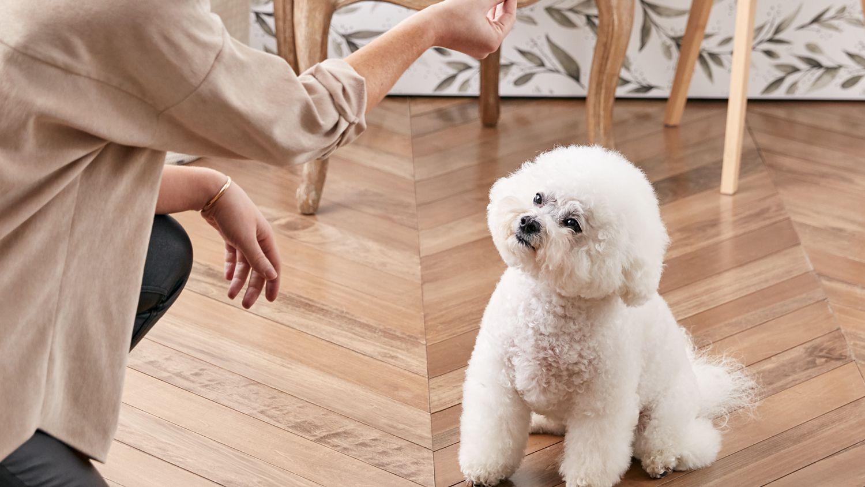 dạy chó ngồi