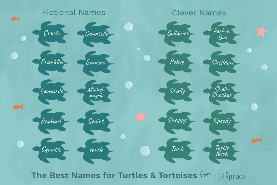name ideas for pet turtles