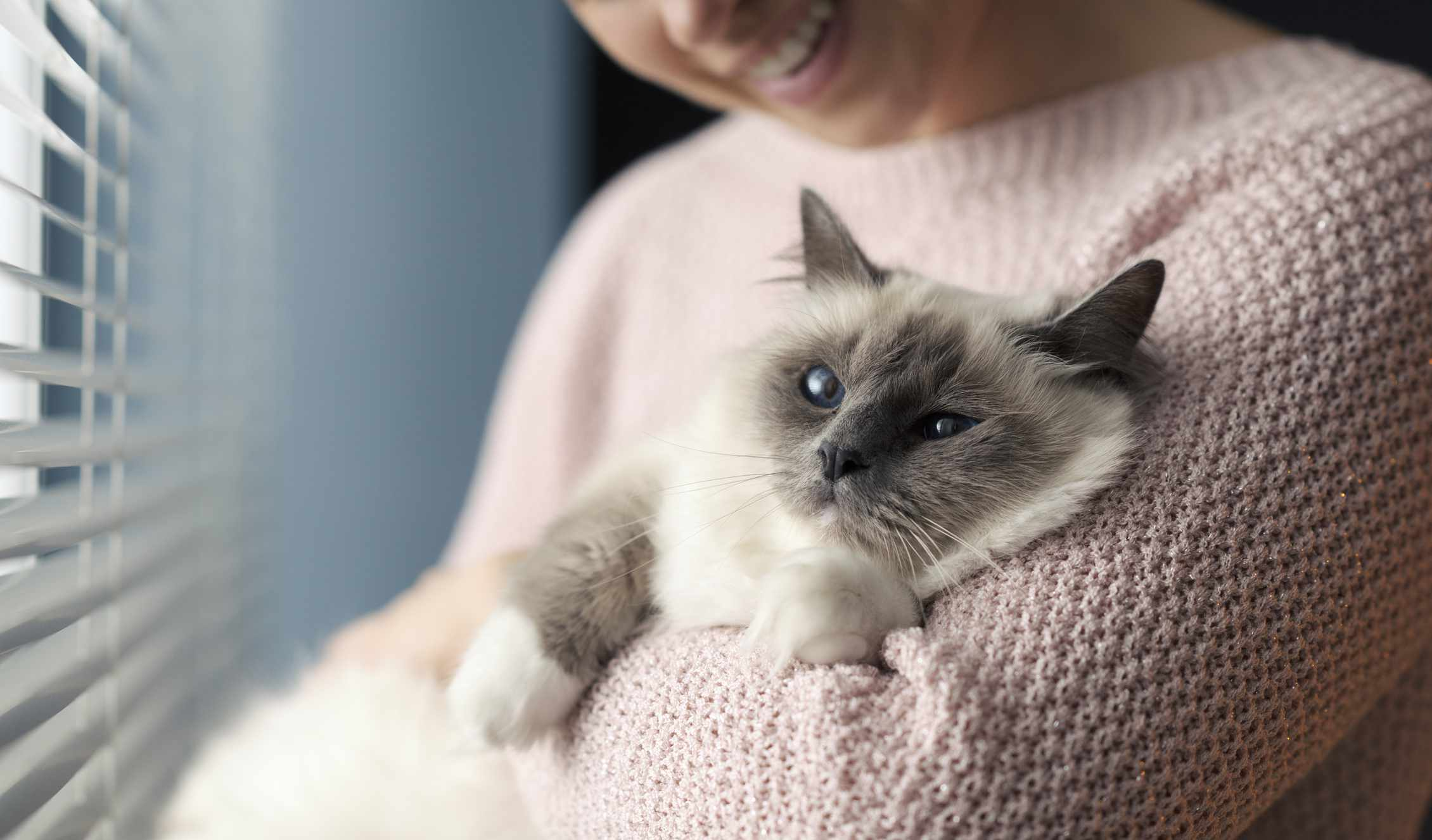 A woman in a white sweater holding a white fluffy cat with blue eyes.