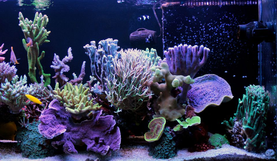 Saltwater coral reef aquarium