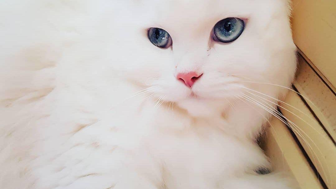 9 Beautiful White Cats and Kittens