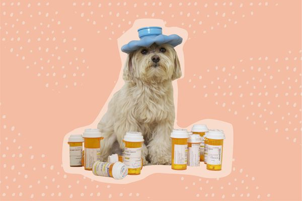 Best Places to Buy Pet Medication Online