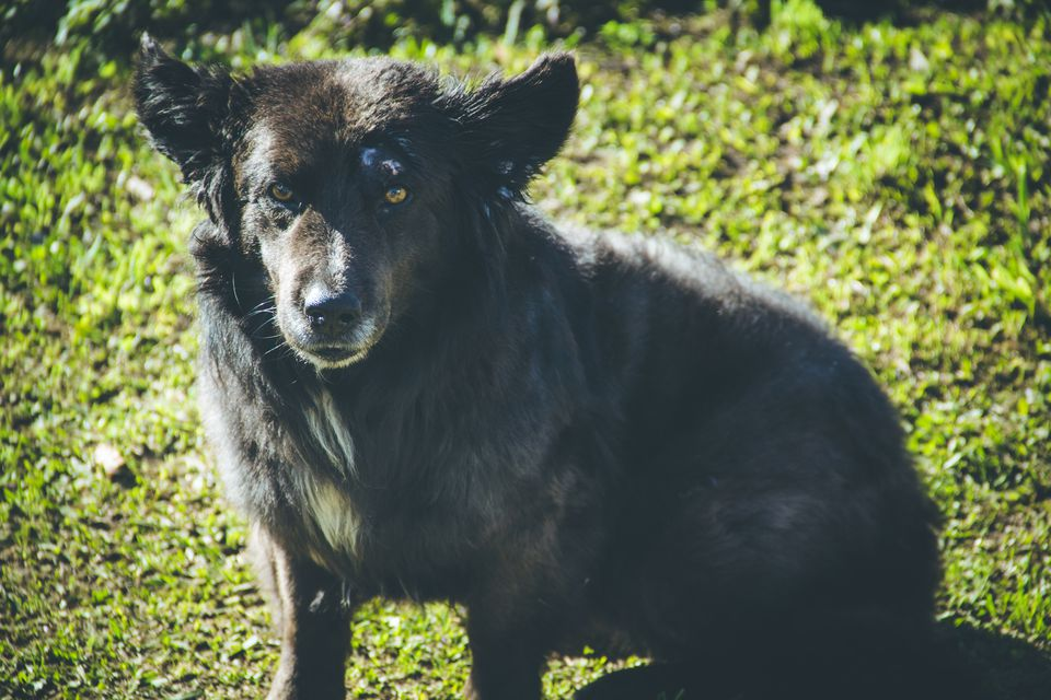 old street dog