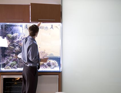Young man standing by aquarium