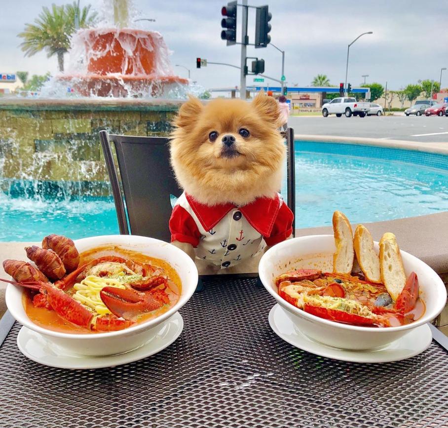 Chewie sentado a la mesa con dos platos de sopa de langosta.