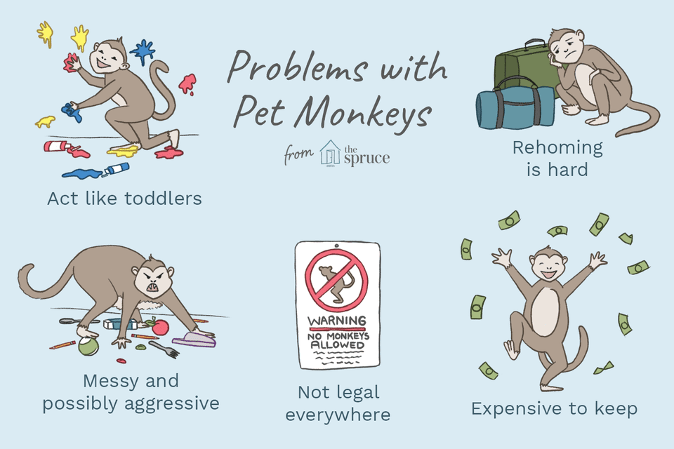 problems with pet monkeys