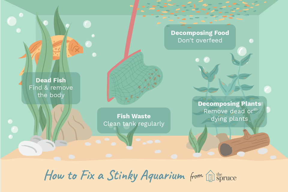 A diagram of how to clean stinky aquarium water
