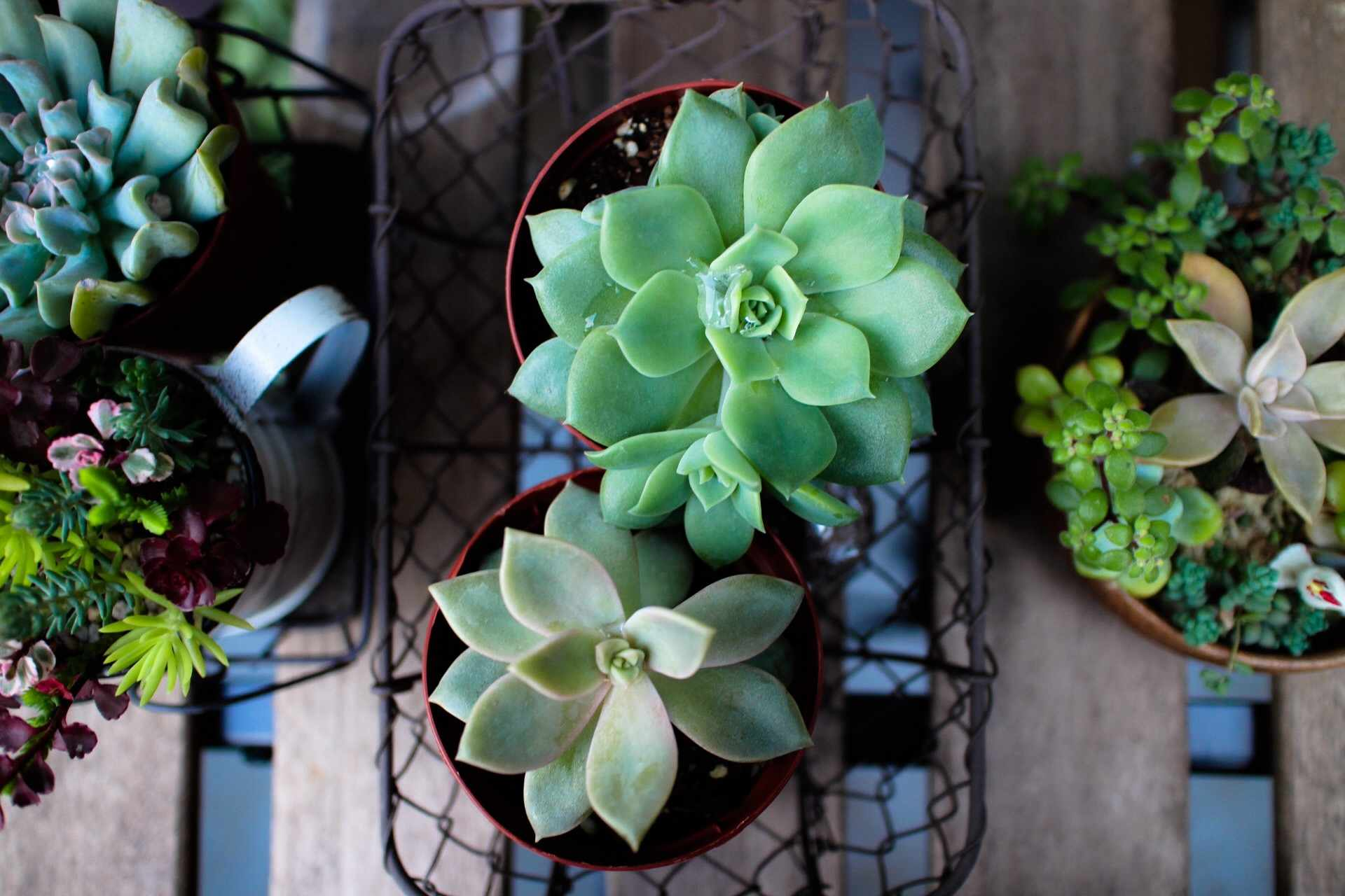 Overview of several pots of succulent plants