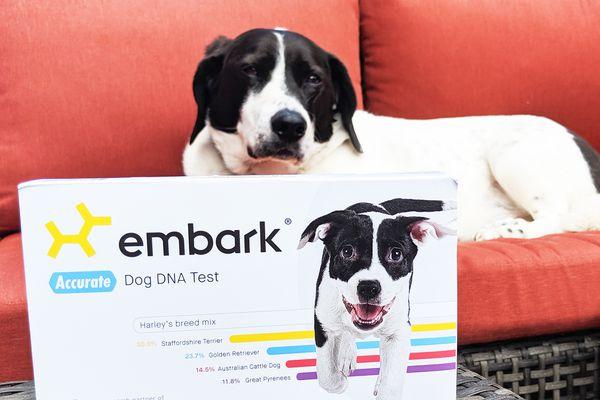 Embark Breed + Health Kit