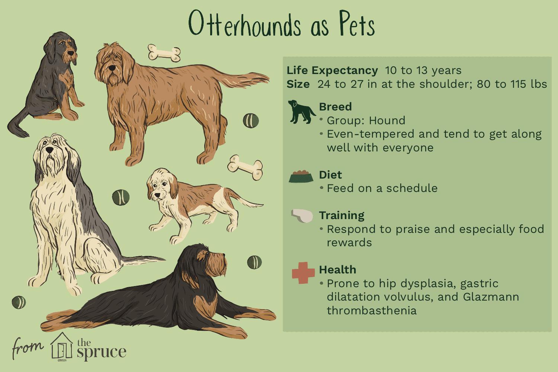 otterhounds as pets illustration