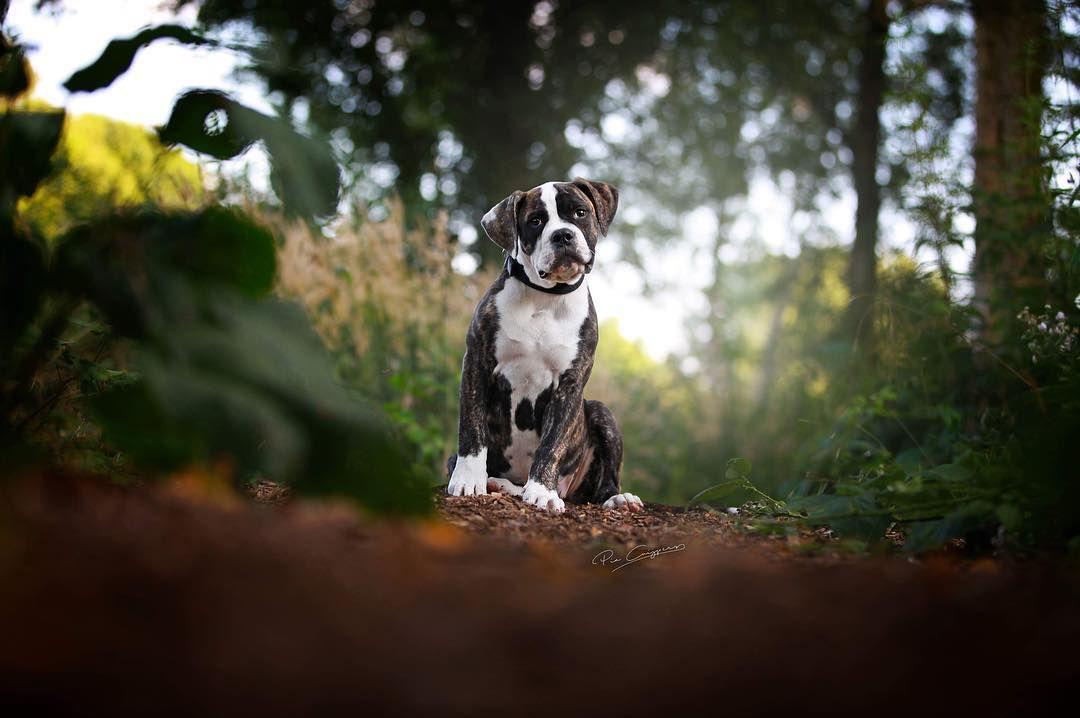 Cute bulldog in woods