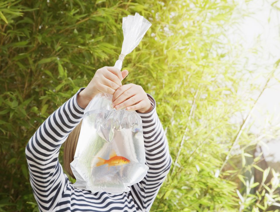 Girl holding goldfish in plastic bag