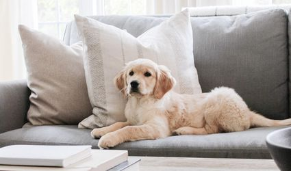 puppy on couch