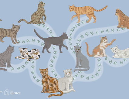 what breed is my cat illustration