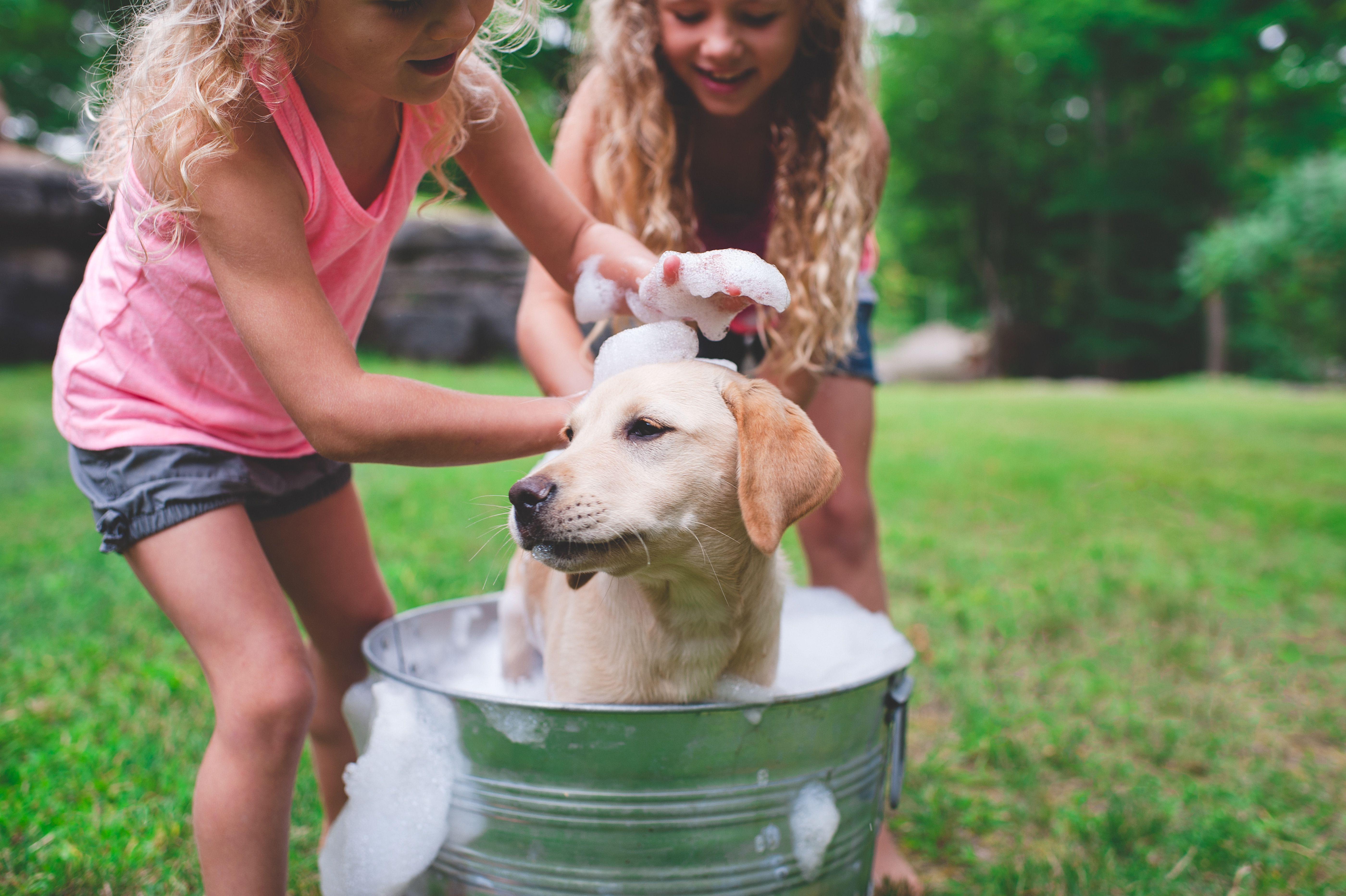 Two sisters bathing pet Labrador retriever puppy