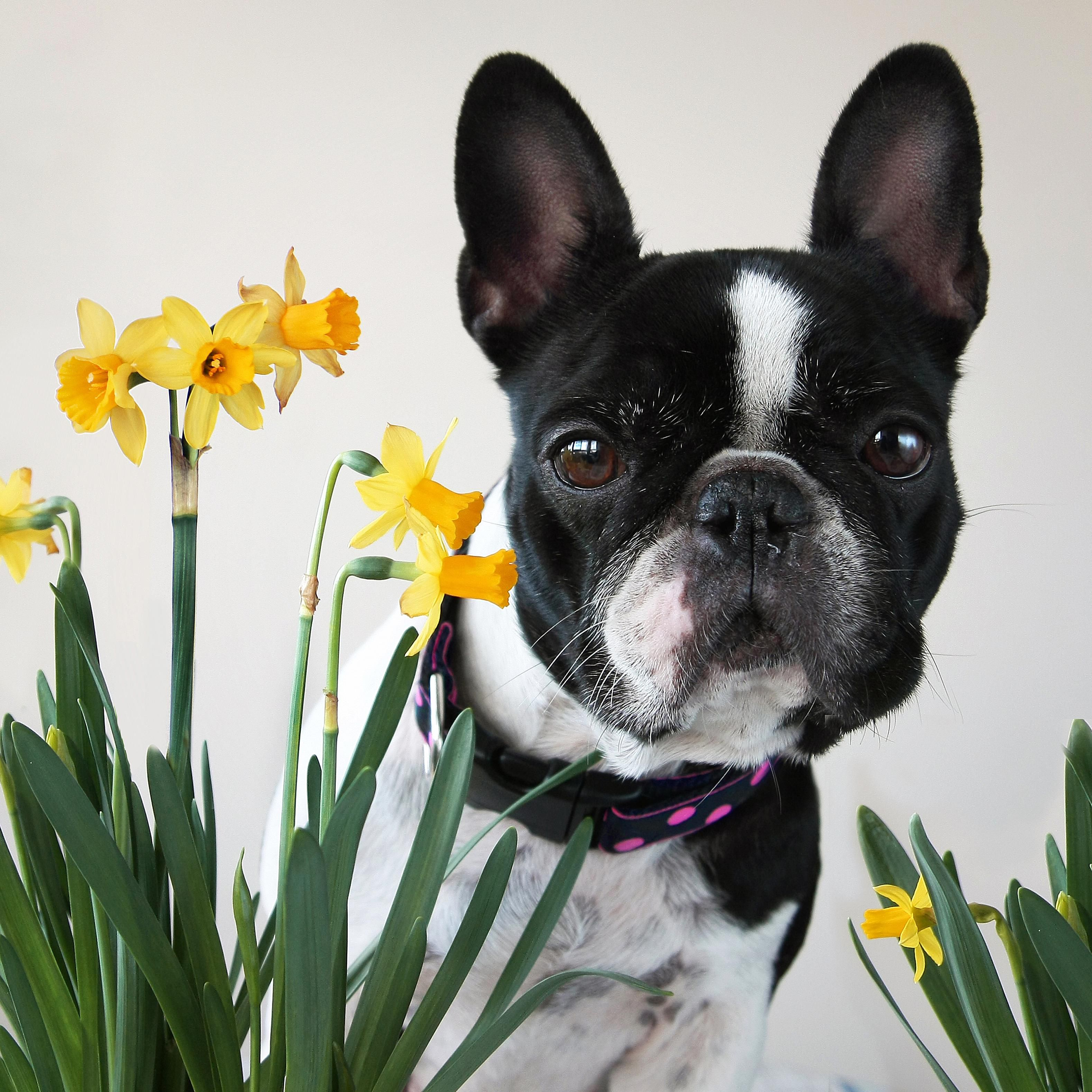 Plants That Are Poisonous To Dogs