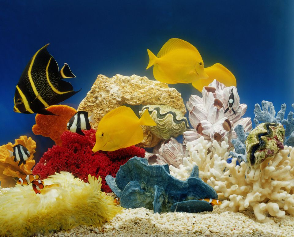 Tropical fish and coral in aquarium