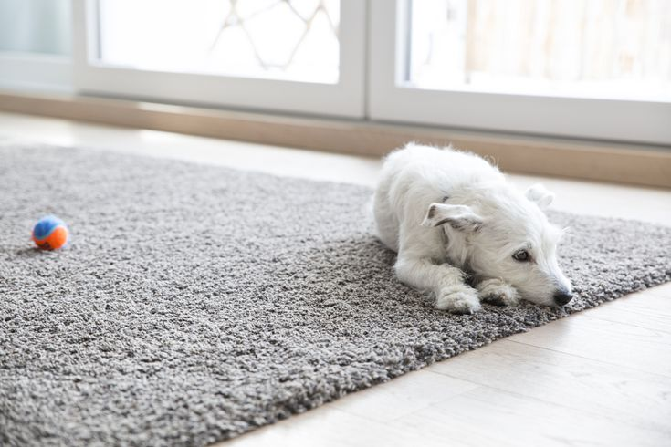 Carpet Cleaner Solutions For Pets