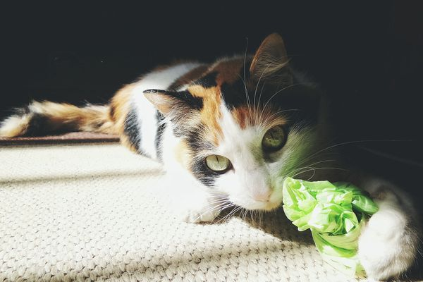 Portrait Of Cat With Green Plastic bag