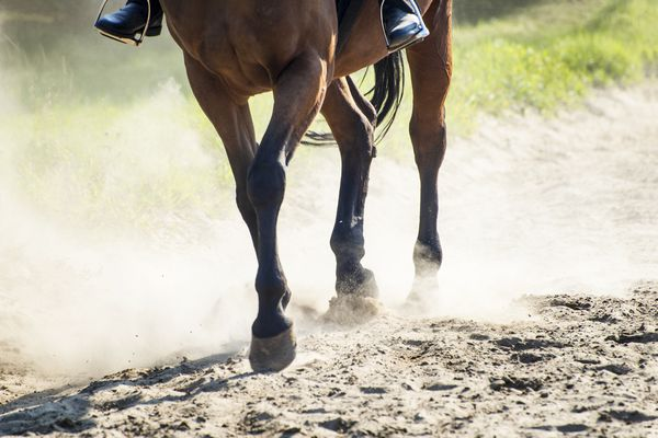 Horse in Sunny Dust