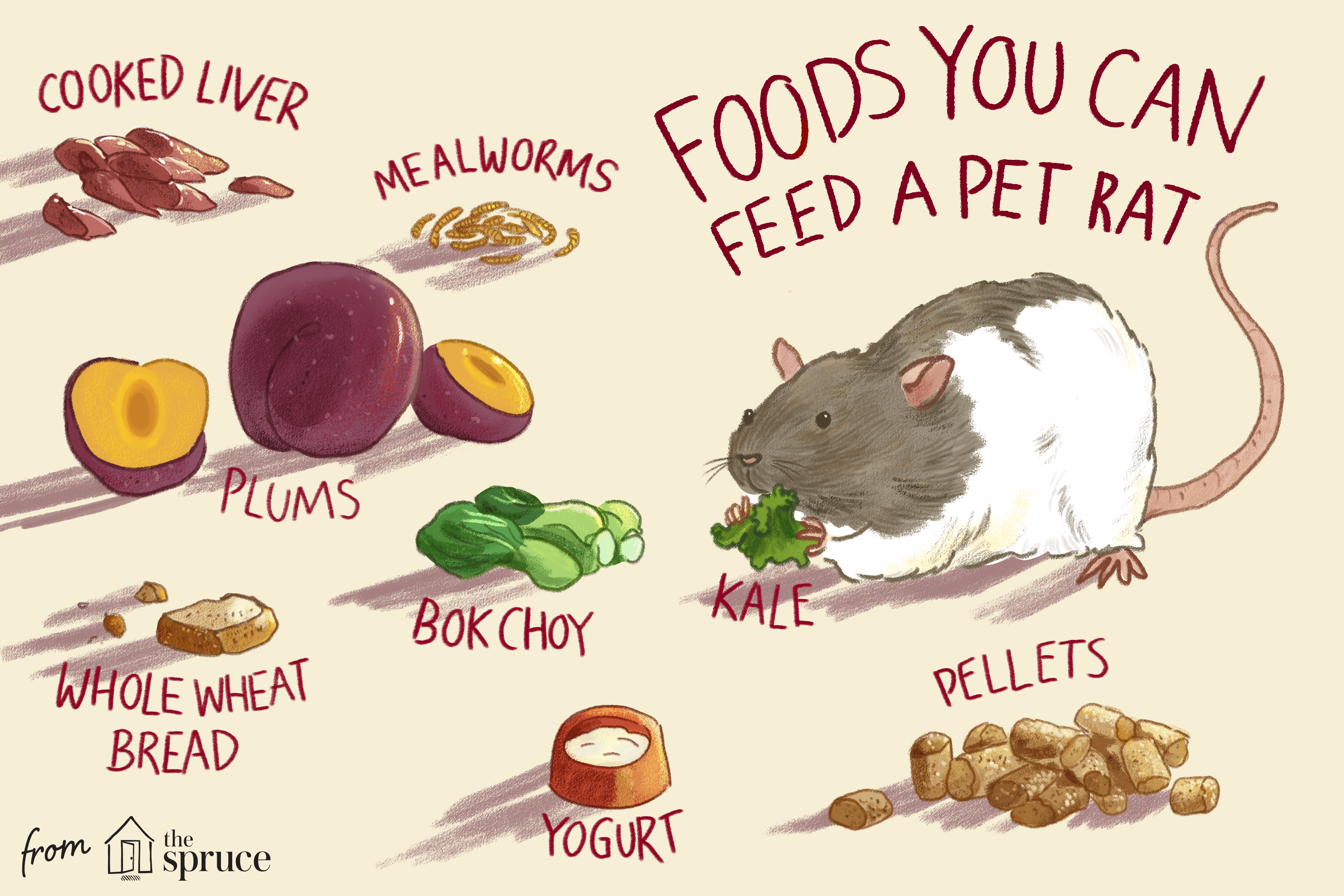 foods you can feed a pet rat