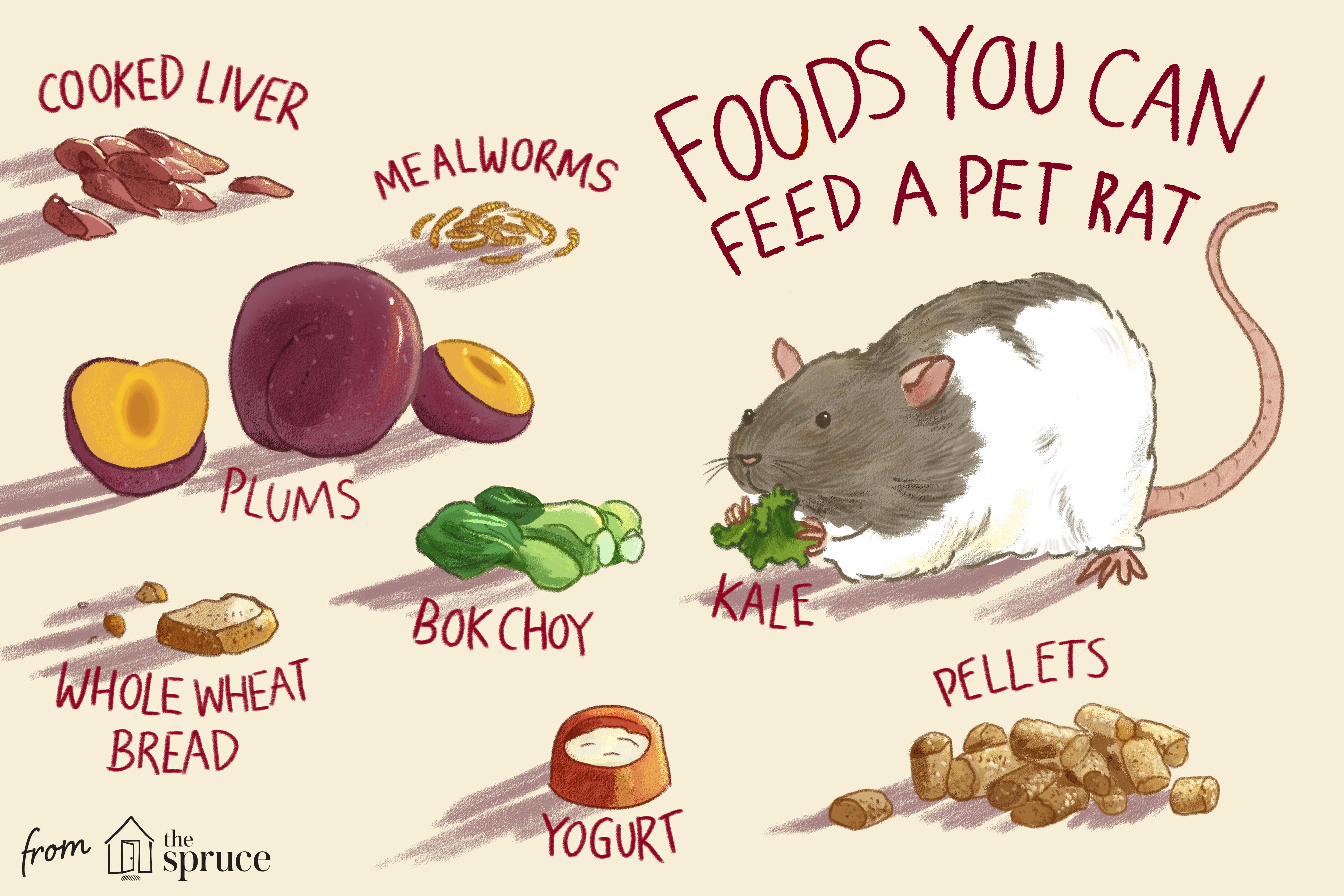 alimentos que puedes alimentar a una rata mascota