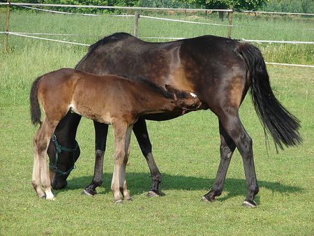 learn what makes a horse a filly