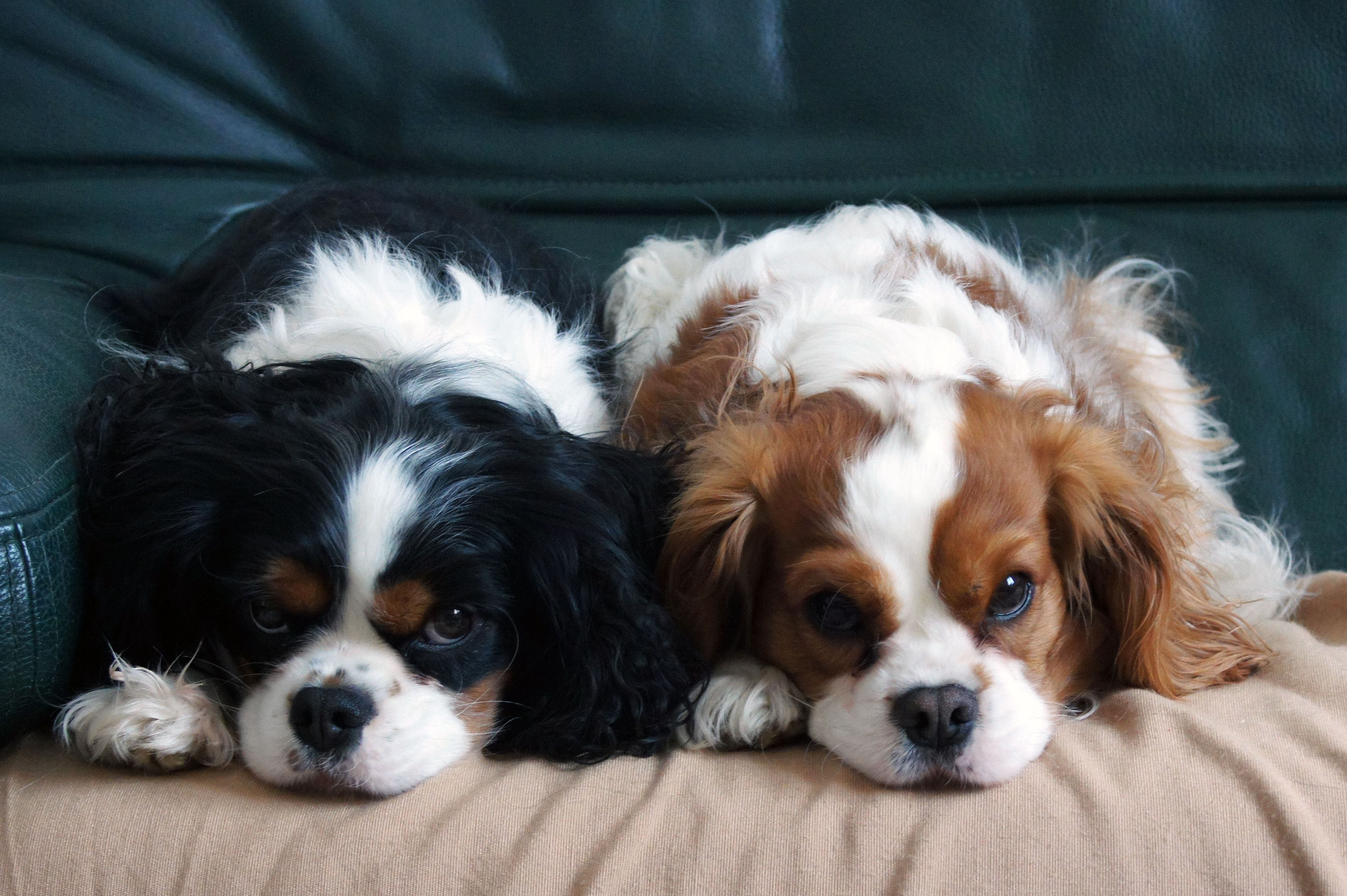 Low Maintenance Dogs For Busy Or Lazy People