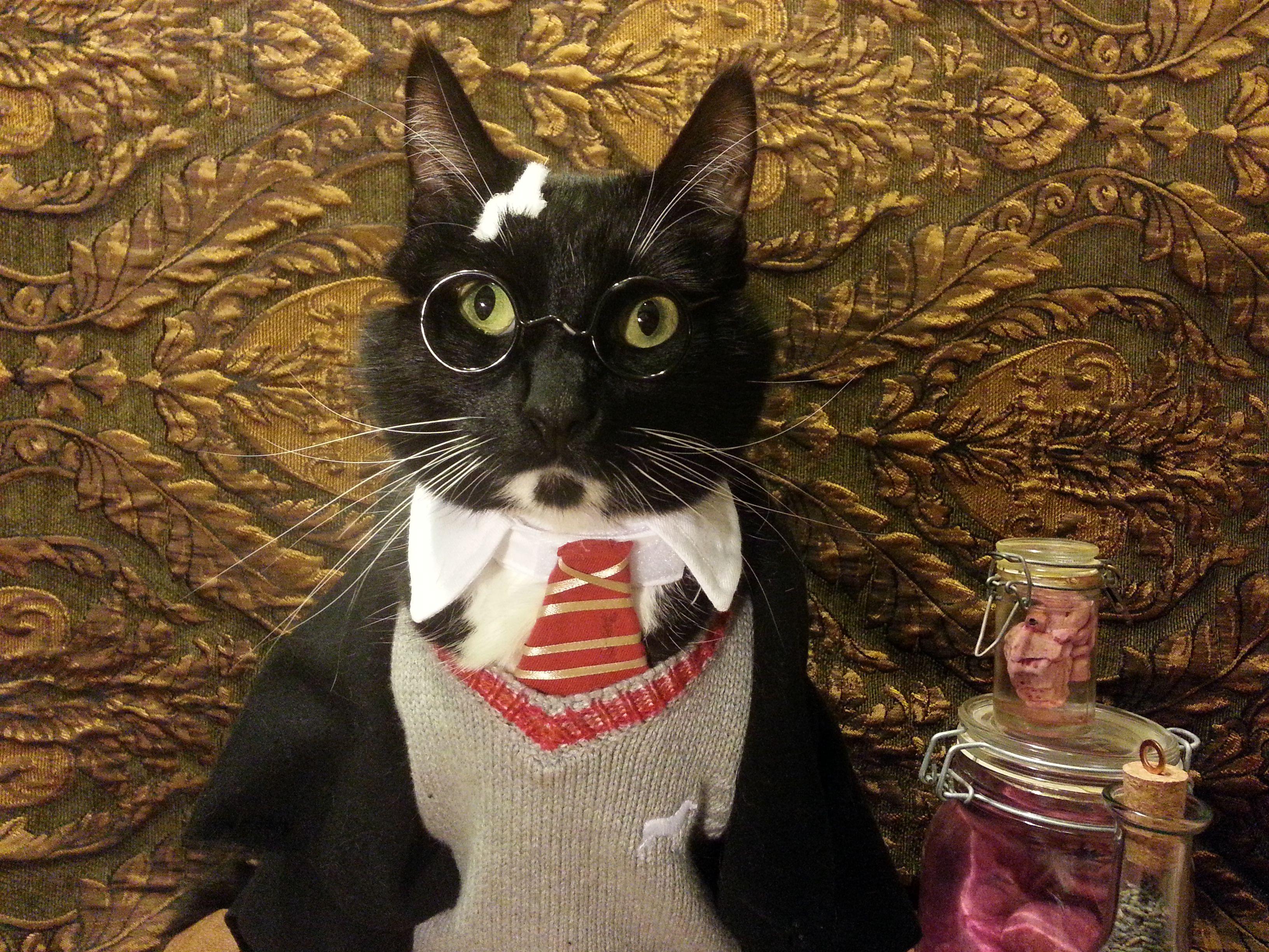 cat in Harry Potter costume
