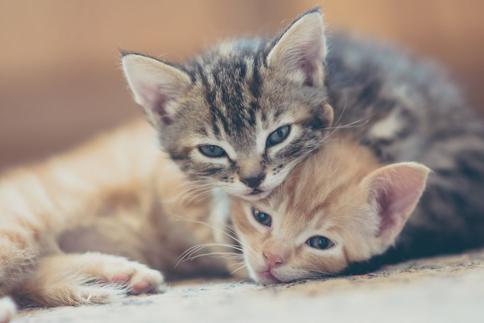 Two kittens cuddling
