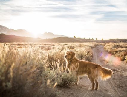 dog out in the desert