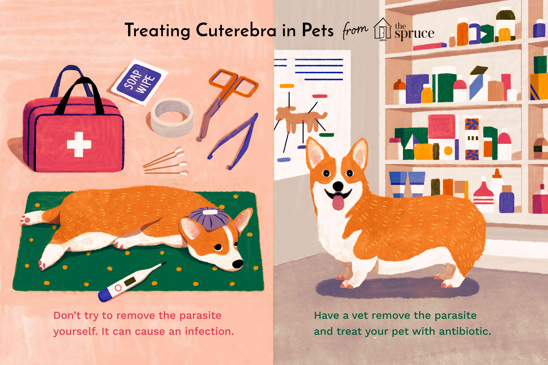 tratar cuterebra en la ilustración de mascotas