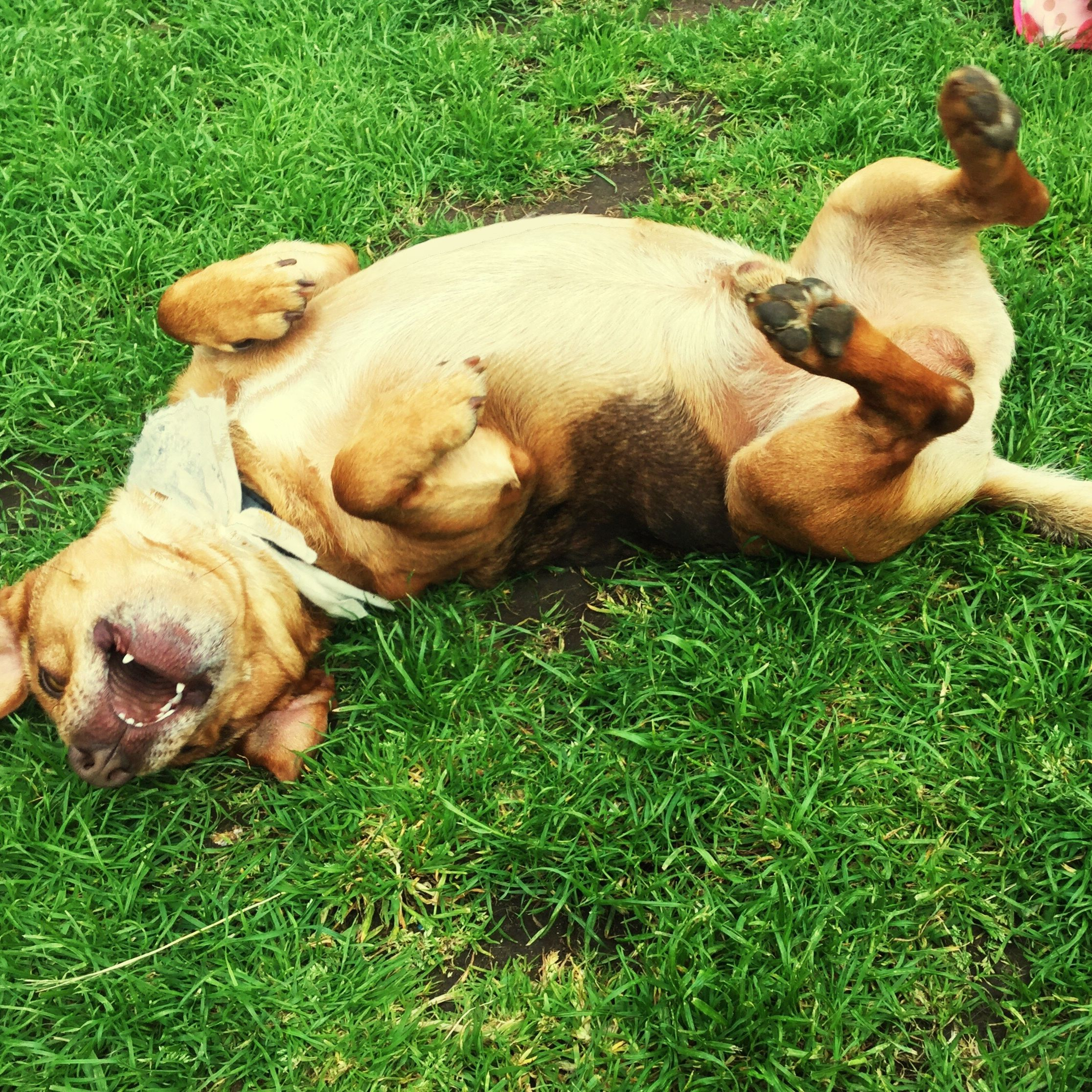 Why Dogs Roll In Poop and Other Stinky Things