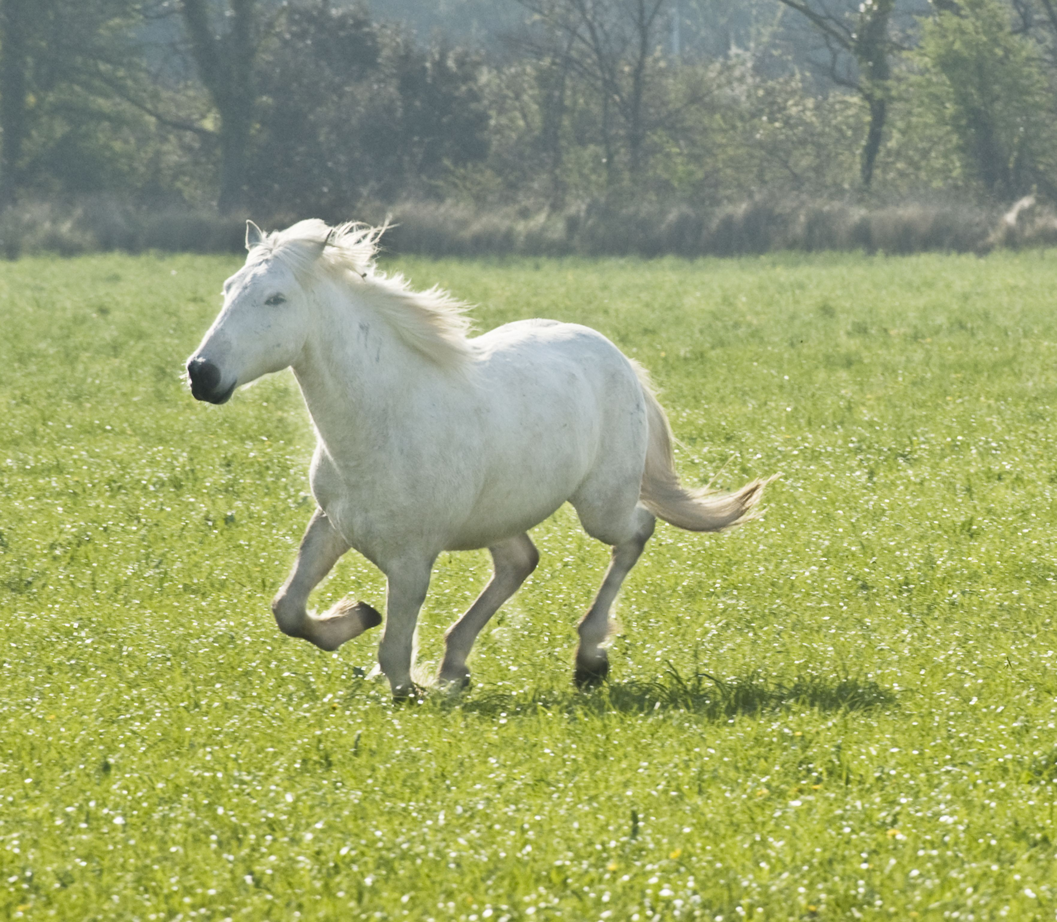 Chasing a horse might be teaching it to run away.