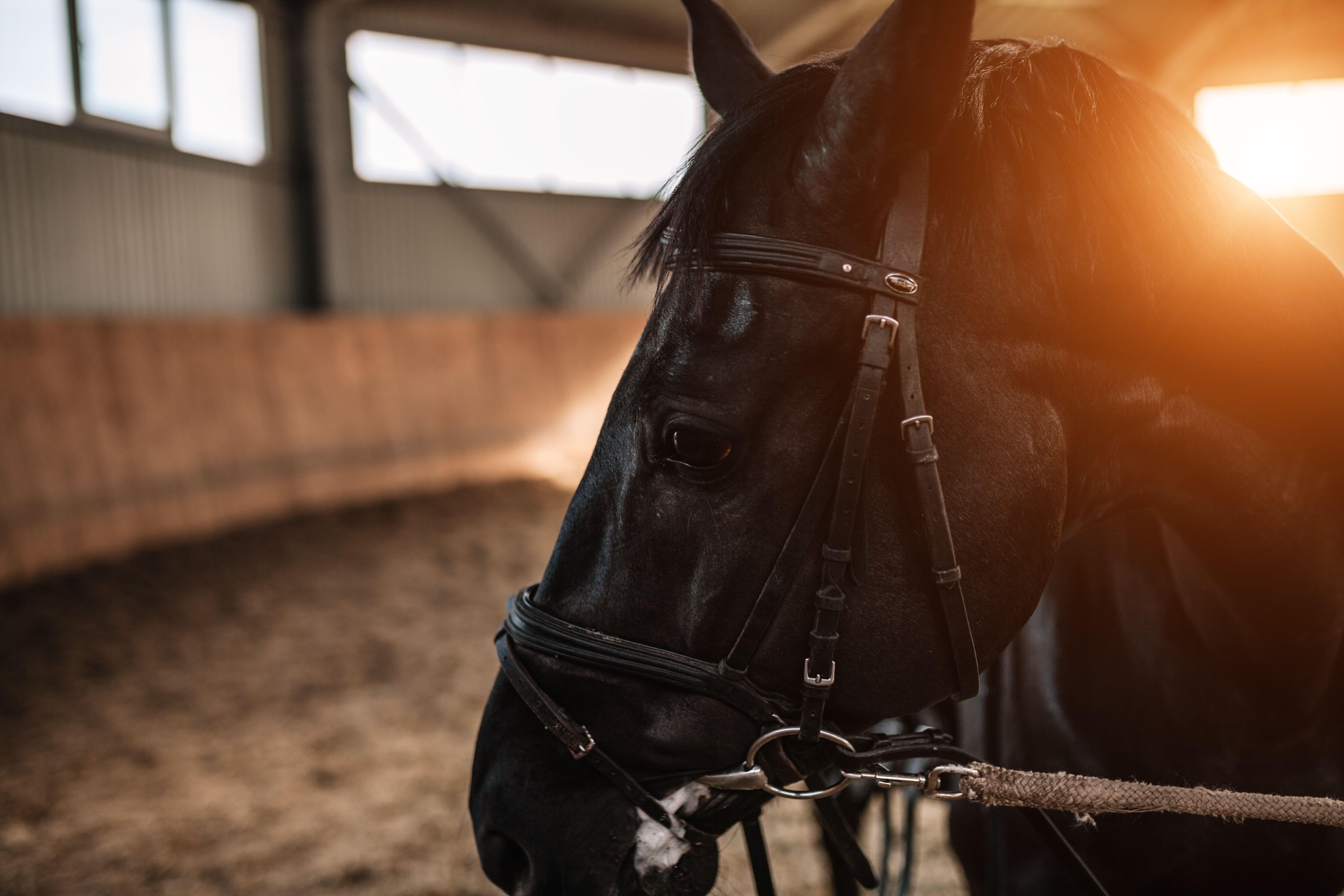 Horse stables close up with sunlight on the background